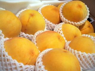 golden peach_1.JPG